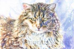 """'His Highness' by M. P. Schipper - watercolour (11.5"""" x 16"""") £110 - contact: marianneschipper@yahoo.com"""